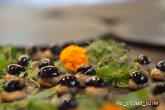 Black olive, like black pearl (Crémant de Bourgogne) Tags: blackolive amuse wine maruta africanbrothers