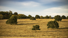1soft shadows (HHH Honey) Tags: sony α7 sonyα7ii wiltshire salisburyplain landscape autumn autumncolours trees copse minolta minolta100mmf28macrolens shadows