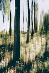 Floodplain (egyugrasatavasz) Tags: floodplain river danube danubedelta nature tree naturephotography wood