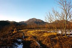 Trees (OzGFK) Tags: 35mm asia korea nikkor nikon seoul analog city film urban dreamycameracafe portra160vc kodak portra snow winter cold country countryside landscape barren evening