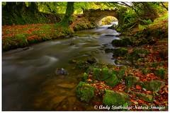 Autumn at Robbers Bridge,Exmoor (www.andystuthridgenatureimages.co.uk) Tags: bridge packhorse exmoor national park lorna done valley long exposure leaves autumn colour beech