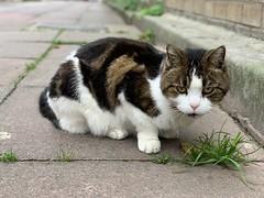 Blenheim Place (sichunlam) Tags: 🐈 🐱 😺 blenheimplace brighton gato eastsussex england siishell mintchocicecream sichunlam