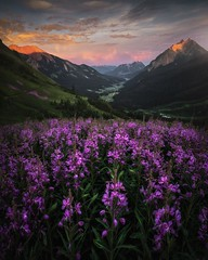 The pink fireweed runs wild in Crested Butte, Colorado. [OC] [1600x2000] by benstrauss (-WildPigs-) Tags: reddit earth