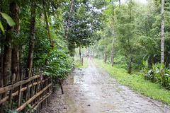 H505_3694 (bandashing) Tags: madubpur hoar khadimpur khal village landscape scenic green monsoon lush foliage trees water sylhet manchester england bangladesh bandashing aoa social documentary akhtar owais ahmed balagonj osmaninagor