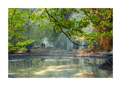 La foret enchantée-2125125A2125 (helenea-78) Tags: bois forêt nature brumes rayonsdesoleil brume espacerambouillet trail