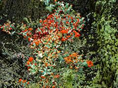 P1020155 (rpealit) Tags: scenery wildlife nature weldon brook management area