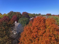 Fall in the suburbs (Gorytunes) Tags: rooftop roof brown green red orange midwest phantom dji drone fall