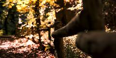 Suivre le chemin de l'Automne (Amanda Hinault - 風流韻事) Tags: ccbysa photobyamandahinault creativecommons pentax pentaxk1ii pentaxart nature forest forêt paysage landscape