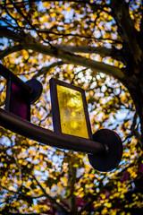 Fall into Art (rg69olds) Tags: 10212018 35mm 5dmk4 canoneos5dmarkiv nebraska sigma35mmf14artdghsm art canon downtown garden modernart omaha outdoor sigma tree window yellow leaves fall 35mmf14dghsm a