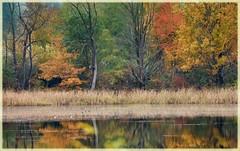 fall estuary colours (marneejill) Tags: nanaimo estuary colours fall autumn trees orange yellow water reflections weeds