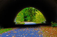 Tunnel view (FailureCriteria) Tags: autumn nikon westerwald foliage tunnel nature green