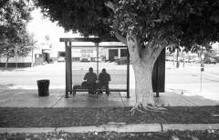 Bus Route (stevenguz) Tags: kodaktrix400 trix trix400 film analog nikonaf600 bw blackandwhite still couple people streetphotography