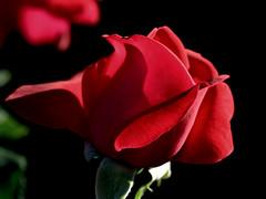 (dmnq_fenot) Tags: cof37lete cof037mari cof037hole cof037ally flora closeup sidelit