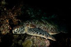 IMG_7198 (Gil Xavier) Tags: underwater scuba philippines canon fantasea g7xmk2 cebu moalbal turtlebay