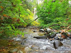 The creek in autumn (walneylad) Tags: murdofrazerpark northvancouver britishcolumbia canada park parkland urbanpark woods woodland forest urbanforest rainforest trees stump leaves ferns trail water creek brook stream rocks pond duckpond october fall autumn afternoon colour color green brown yellow orange red nature view scenery