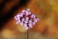 Flower (Hugo von Schreck) Tags: hugovonschreck flower blume blüte macro makro canoneos5dsr tamron28300mmf3563divcpzda010