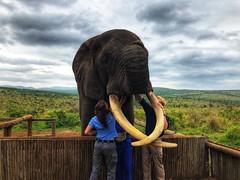 IMG-20181012-WA0000 (NYS Department of Environmental Conservation) Tags: dle encon beci dec nysdec africatrip southafrica elephants poaching ivory csi forensictraining wtf wildtomorrowfund ukewelaforeverwildreserve rambotheelephant elephantrescue