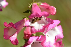 (Sandra Király Pictures) Tags: flower flowers makro macro natur outdoor autumn