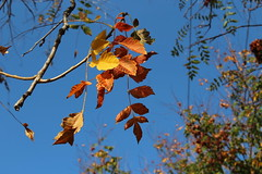 Autumn (Argyro Poursanidou) Tags: autumn fall leaves leaf foliage