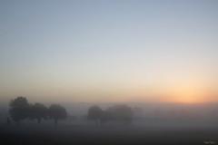 L'aurore ... (martine_ferron) Tags: ciel leverdusoleil aube arbre mayenne matin brume aurore