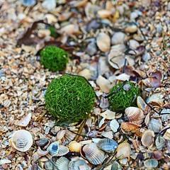 13023832 (aniaerm) Tags: sea coastalfinds sand