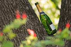 (bryan_may) Tags: green bpsop tree austincollege wine flowers ruleofthirds bottle