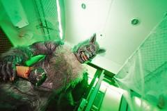 IMG_2055 (2) (Time Grabber) Tags: timegrabber blaenavonrailway blaenavonheritagerailway steamtrains blaenavon railway monsters ghosts zombies vampires clowns witches halloween festival werewolf sinister railwaycarriage