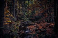 Durch den Wald (simonpe86) Tags: light spaziergang schwarzwald blackforest wald walk forest breitnau badenwürttemberg deutschland de