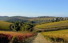Vigne 3 (antonella galardi) Tags: toscana siena 2018 autunno chianti gaiole brolio ricasoli vigna vino wine