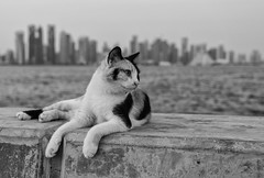 "New model (Pawel Wietecha) Tags: cat animal doha model light outdoor city portrait pretty beauty pawel wietecha blackandwhite bw mono monochrome blanc weis schwarz noir black white ""bw"" blackwhite pet qatar travel"