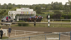 Fort Erie Racing (rumimume) Tags: potd rumimume 2018 niagara ontario canada photo canon 80d forterie racetrack horse thoroughbred race outdoor day summer