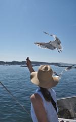 M2109134 E-M1ii 12mm iso200 f5.6 1_2000s -0.3 (Mel Stephens) Tags: galicia holiday o grove spain 20180910 201809 2018 q3 10x16 5x8 tall olympus mzuiko mft microfourthirds m43 1240mm pro omd em1ii ii mirrorless animal animals nature wildlife fauna bird birds gull gulls coast coastal