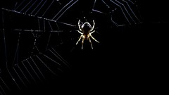 Spinne (ibrahimissa1) Tags: