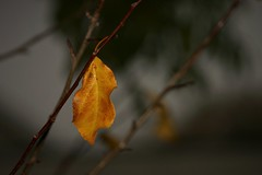 last leaf (EllaH52) Tags: autumn grey branches twigs leaf yellow minimalism simplicity bokeh macro sky