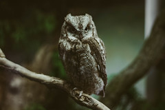 (Peteyu) Tags: autumn animal animals canon warsaw travel trees tree nature outdoor natural poland forest portrait green 50mm