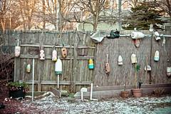 2012 christmas-90 (alanschererphotographer) Tags: boats beach capecod kids people birds boston