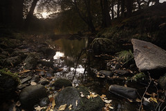 Cloughleagh Forest (OgniP) Tags: forest water sky evening autumn ireland wicklow rocks leaves trees stream