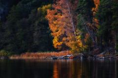 trees (anderswetterstam) Tags: fall lake landscape nature seasons water autumn tree trees yellow beauty