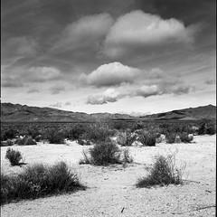 March desert (ADMurr) Tags: california desert clouds jtnp hasselblad 80mm zeiss planar bw black white monochrome fuji acros dac849