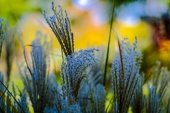 Fujifilm autumn colors (vinnie saxon) Tags: plant bokeh fujifilm colors nature