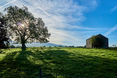 The Little Barn (scottprice16) Tags: england lancashire clitheroe ribblevalley autumn september 2018 barn tree shadow sun light shade sky cloud morning sony sonya6000 zeiss1670mmf4 outdoors walk coutryside grass landscape