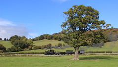 Passing the tree (Duck 1966) Tags: theearl 822 wllr narrowgauge wales steam locomotive train timelineevents