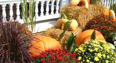 Pumpkin and Hay Bales (Striped Stockings Studio) Tags: pumpkins hay bales autumn fall