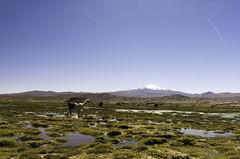 América del Sur Altiplano (Petouso) Tags: bolivia bolivie americadelsur amériquedusud paysage reflets landscapes altiplano laguna lac volcan neige lama