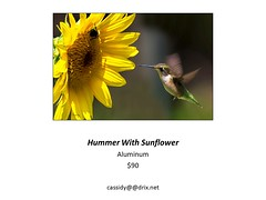 "Hummer With Sunflower • <a style=""font-size:0.8em;"" href=""https://www.flickr.com/photos/124378531@N04/43547406250/"" target=""_blank"">View on Flickr</a>"