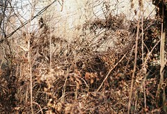 (kotmariusz) Tags: nature filmphotography 35mm analog poland