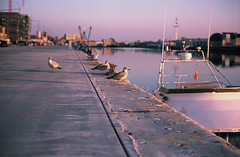 Golden hour turning purple (Don Frodo) Tags: northsea oostende ostend seagulls analog leicam leica 50mm zeisssonnar