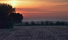 Mais häckseln - manchmal gehört auch die Nacht der Erntearbeit; Bergenhusen, Stapelholm (15) (Chironius) Tags: stapelholm bergenhusen schleswigholstein deutschland germany allemagne alemania germania германия niemcy himmel sky ciel cielo hemel небо gökyüzü wolken clouds wolke nube nuvole nuage облака sonnenuntergang sunset atardecer tramonto zonsondergang закат dämmerung dusk schemering crépuscule crepuscolo abend evening abends klinx