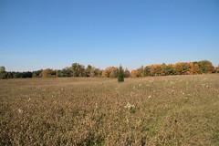 Maybury-State-Park-Field_Northville-MI_10-07-2011l (Count_Strad) Tags: mayburystatepark maybury state park northville michigan mi fallcolor field