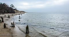 Beach & Stumps @ Savage Neck Dunes NAP - Northampton County, VA (Paul Diming) Tags: dailyphoto naturalareapreserve beach chesapeakebay virginia pauldiming northamptoncountyvirginia northamptoncounty easternshore savageneckdunes peninsula delmarvapeninsula easternshorevirginia va winter capecharles unitedstates us